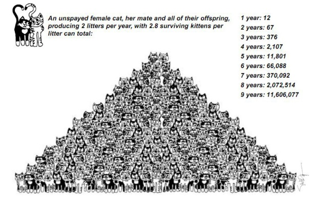 Cat-spay-neuter-pyramid