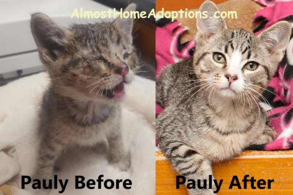 pauly-before-after